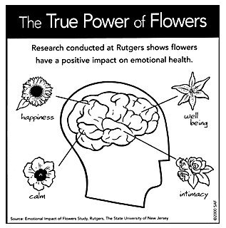 healing powers of flowers.jpg