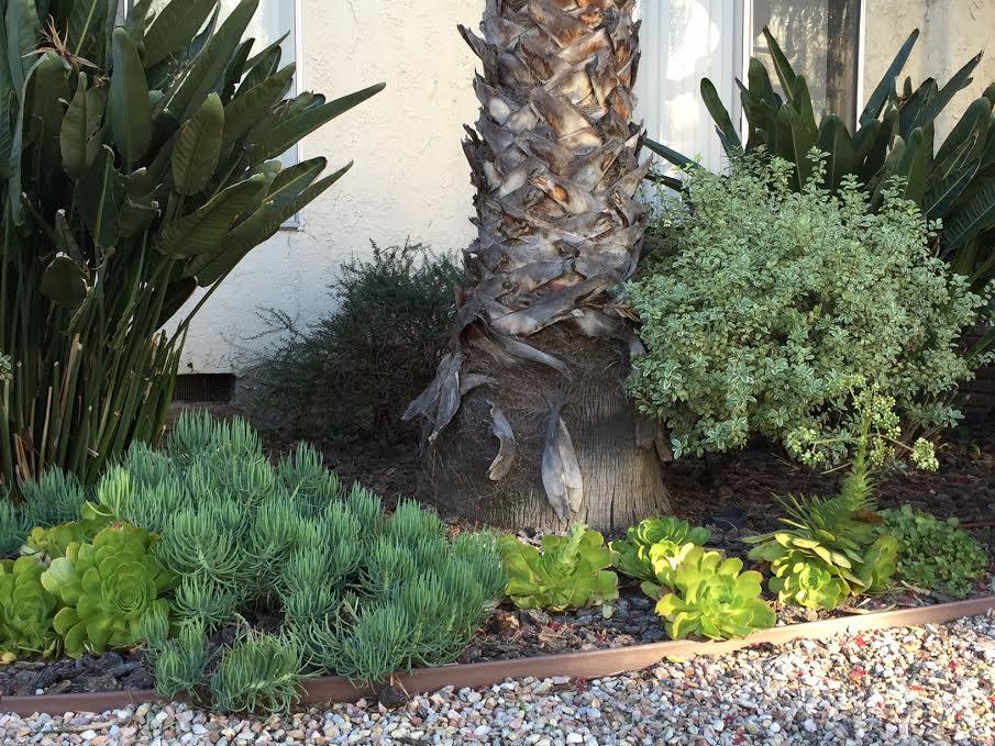 Los Angeles Succulents