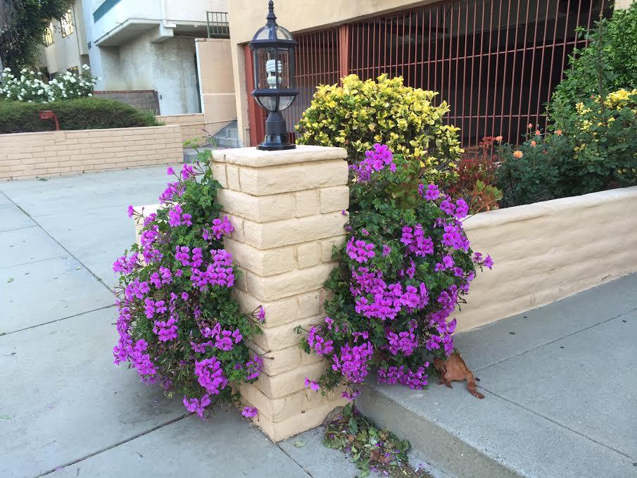 Los Angeles Outdoor Plants