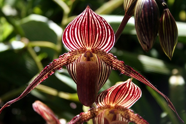 orchids3.jpeg