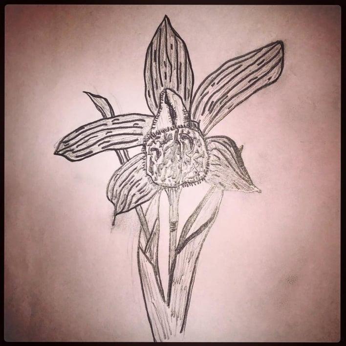 orchids_healing_power.jpg