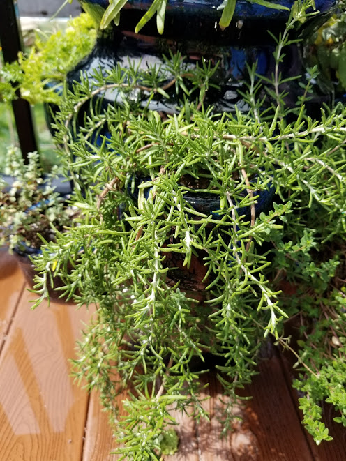 rosemary and flowers