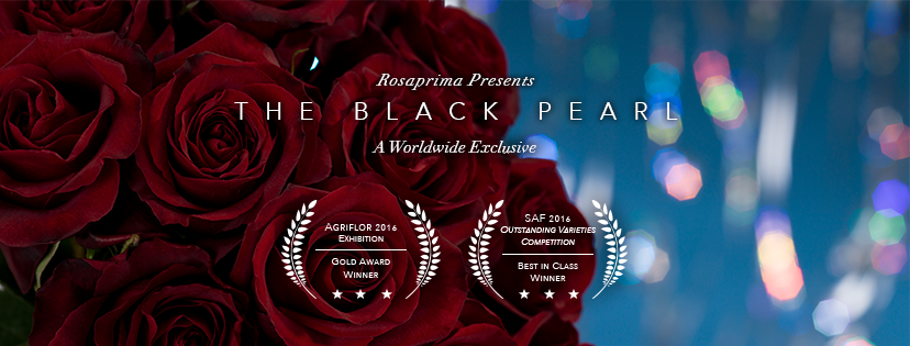 BLACK PEARL ROSES 1.png
