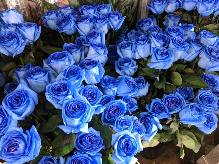 blue roses-1