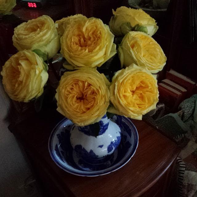 yellow_roses_boston.jpg
