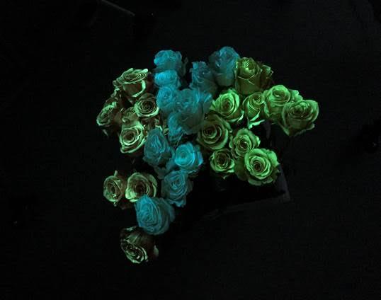 star wars roses.jpg