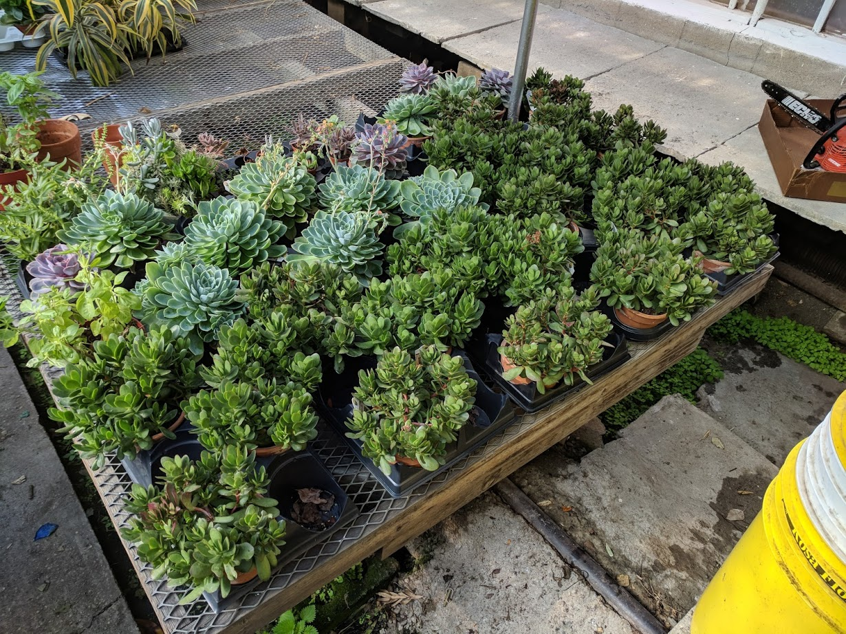 succulents boston.jpg