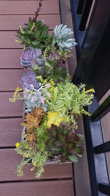 succulents_in_boston.jpe