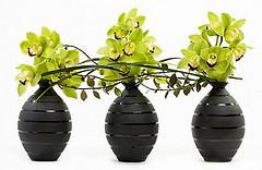orchids boston