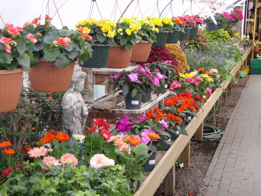 mothers_day_greenhouse
